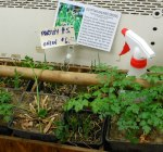 Fresh veggies and starts from local farm partners